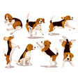 cute cool beagle puppy set dogs vector image