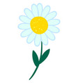 daisy flower on white background vector image vector image