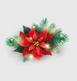 red poinsettia plant with christmas tree branches vector image vector image