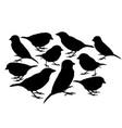 big collection sparrow bird silhouette vector image vector image