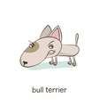 Bull terrier Dog character isolated on white vector image vector image