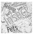 Stick Insect Word Cloud Concept vector image