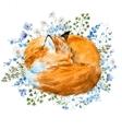 watercolor sleeping fox vector image