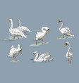 white swan collection on blue background hand vector image vector image