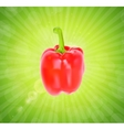 Colored Fresh Sweet Pepper Isolated on White vector image
