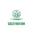 cbd cannabis marijuana pot hemp leaf with line art vector image