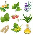 herbal medicine vector image vector image