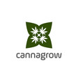 cannabis or cbd logo design vector image