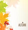 Leaves Border vector image