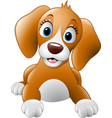 cartoon cute dog vector image