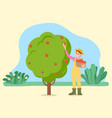 smiling harvester picking apples in orchard vector image vector image