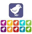 chick icons set flat vector image vector image