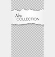 torn paper story paper scraps new collection vector image vector image