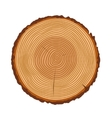 Tree trunk rings texture isolated vector image vector image