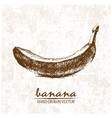 digital detailed banana hand drawn vector image vector image