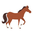 farm animal - horse vector image