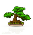 isolated banzai tree vector image