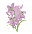 three purple lilies vector image vector image
