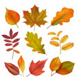 autumn leaves realistic yellow and red fall leaf vector image
