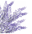 Lavender flower in watercolor paint style