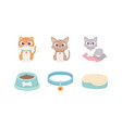 cats with collar cushion food bowl pets vector image vector image