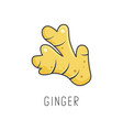 ginger line cooking isolated vector image vector image