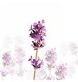 Lavender flower in watercolor paint