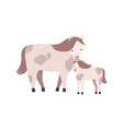 horse and foal or colt isolated on white vector image