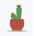 cactus and flowers in bloom vector image vector image