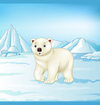 cartoon polar bear on arctic tundra vector image