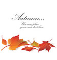 fall leaf nature banner autumn leaves background vector image vector image