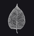 skeletonized leaf of a tree on a black vector image vector image
