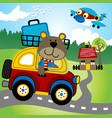 cartoon bear driving a little car vector image vector image