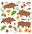 set with cute boars and forest environmental vector image vector image