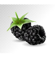 sweet blackberries on the transprent background vector image vector image