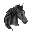 Black graceful horse portrait vector image vector image