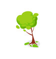 green ash tree isolated icon vector image vector image