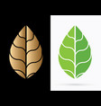 luxury leaf vector image vector image