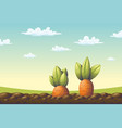 two carrots on a field vector image