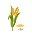 millet grass cereal crops or grains vector image vector image
