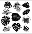 isolated silhouettes of tropical palm leaves vector image