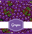 delicious grapes fresh fruit label pattern vector image