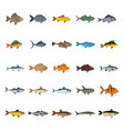 fish set flat icons vector image
