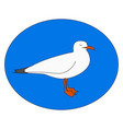 white gull on white background vector image vector image