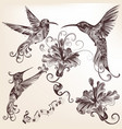 collection hand drawn hummingbirds for design vector image vector image