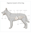 Digestive system of the dog vector image vector image