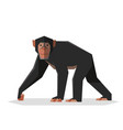 flat geometric chimpanzee vector image vector image