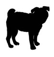 french bulldog purebred dog standing in side view vector image vector image