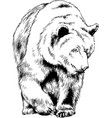 brown bear is drawn in ink hand vector image