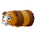 cartoon guinea pig isolated on white background vector image vector image